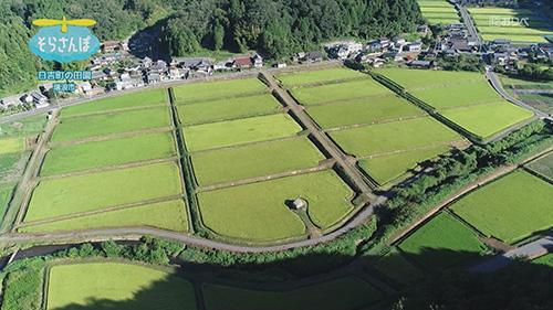 日吉機械化営農組合の田園